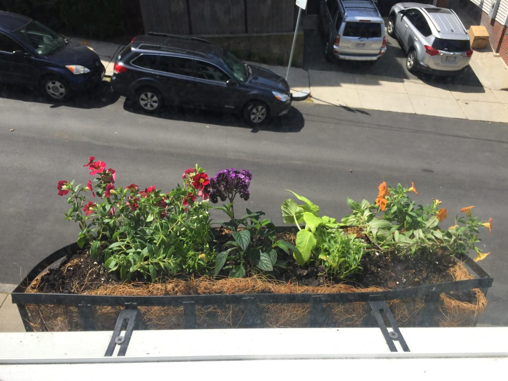 Southie Window Boxes 2017