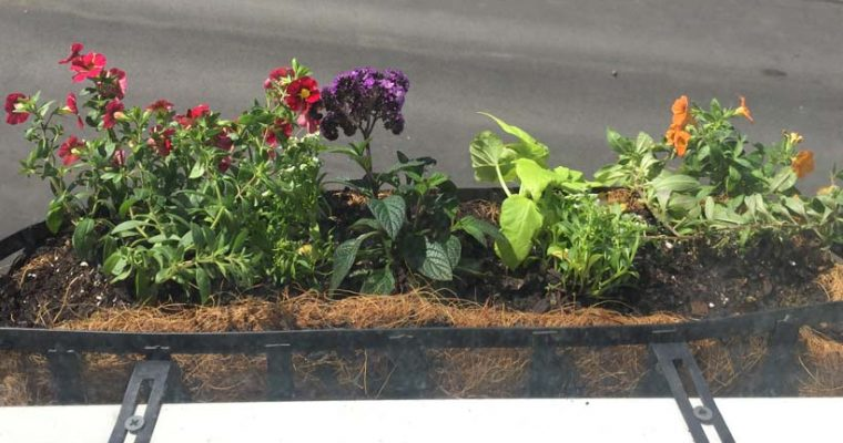 Southie window boxes